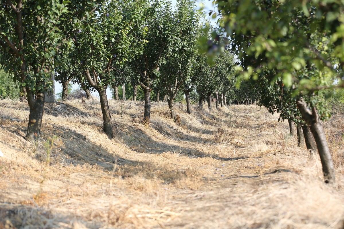 verger, Agriculture, l'été, arbre, paysage, plante, forêt, rural, Itinéraire, arbres