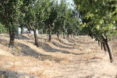 orchard, agriculture, summer season, tree, landscape, plant, forest, rural, road, trees