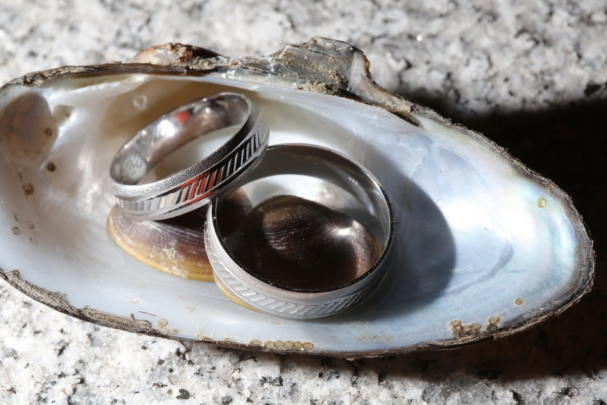 platinum, wedding ring, mussel, jewelry, luxury, shining, close-up, detail, details, gold