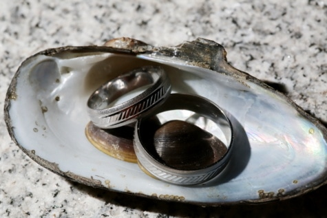 zlato, morska školjka, vjenčani prsten, sija, nakit, vjenčanje, luksuzno, metal, metalik, platina