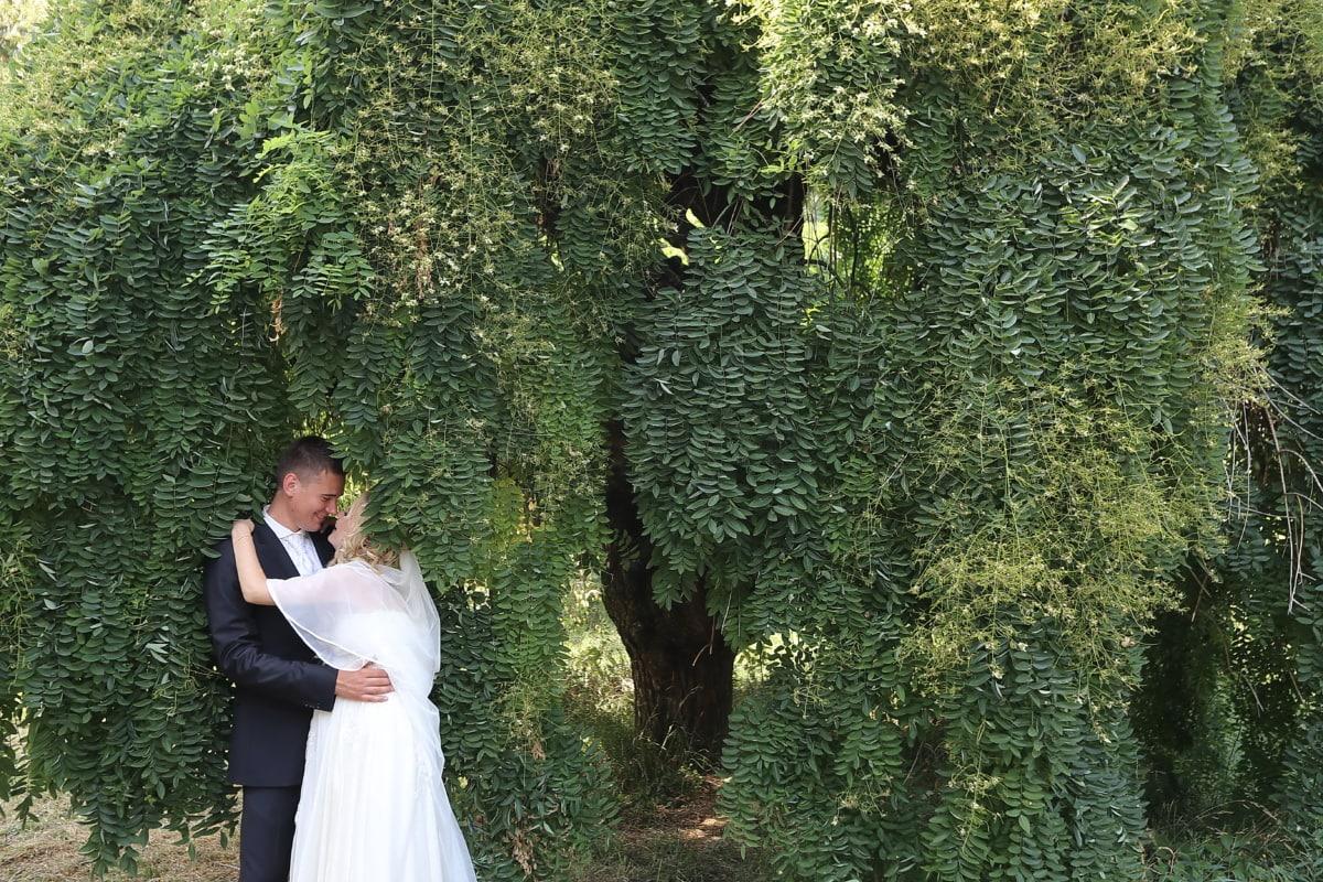 groom, bride, underneath, trees, people, wedding, tree, love, woman, engagement