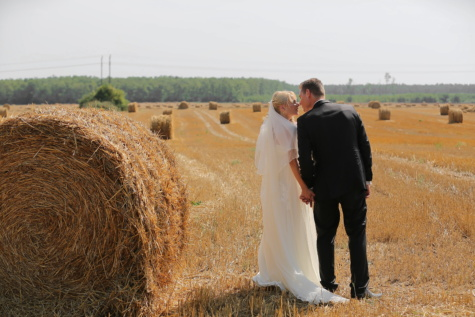 wheatfield, hay field, barley, kiss, groom, bride, agriculture, wheat, hay, farm
