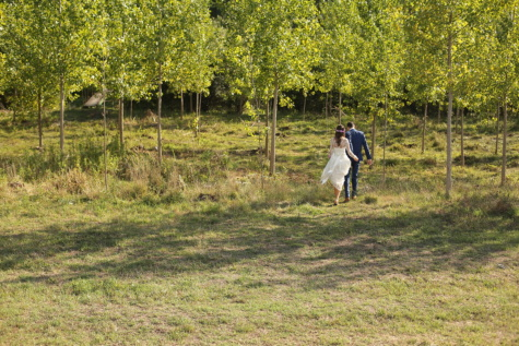 groom, bride, forest, hike, grass, tree, leaf, nature, landscape, wood
