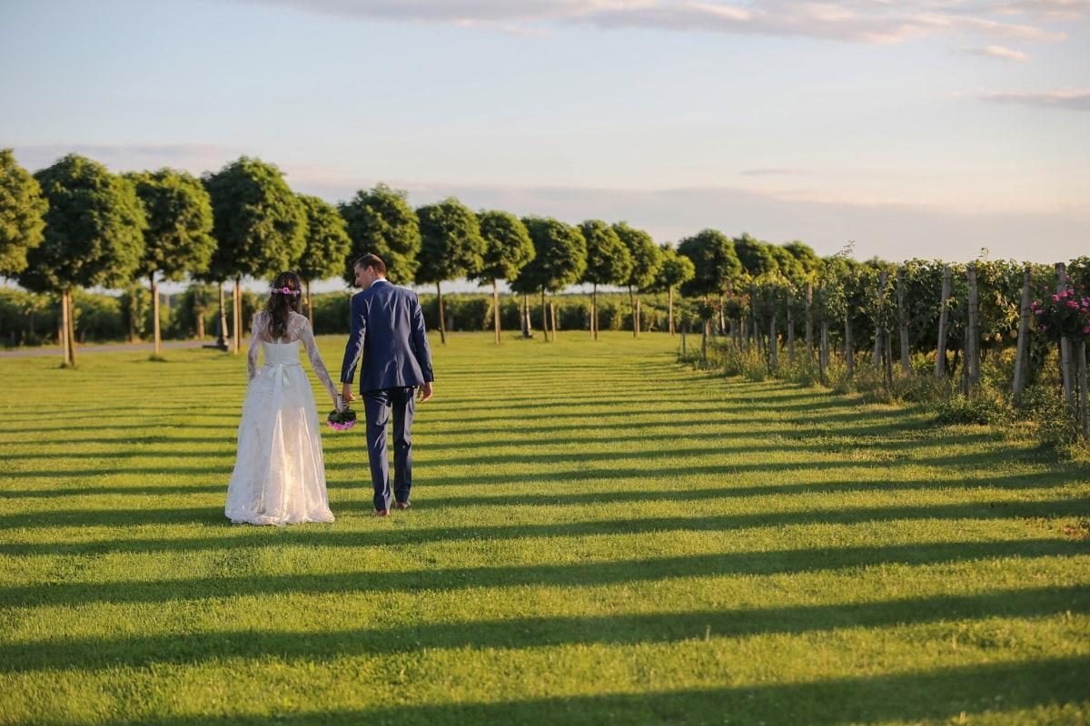 джентльмен, дамы, виноградник, поле, Свадьба, девушка, невеста, трава, люди, пейзаж