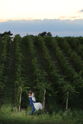 vineyard, hilltop, bride, groom, trees, tree, forest, landscape, plant, park