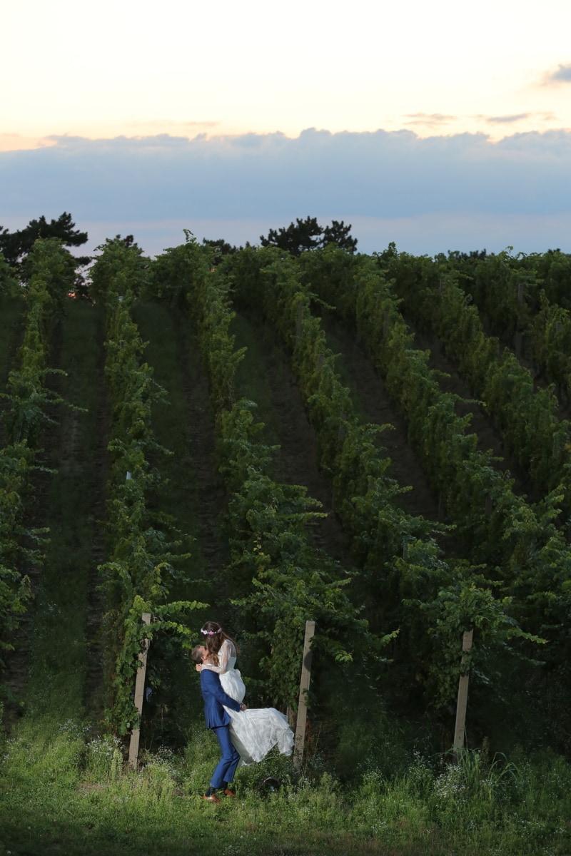 vineyard, hilltop, bride, groom, trees, tree, forest, landscape, plant, park