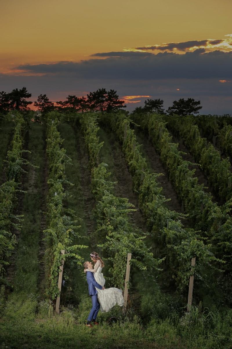 hilltop, sunset, vineyard, man, hugging, woman, tree, landscape, mountain, people