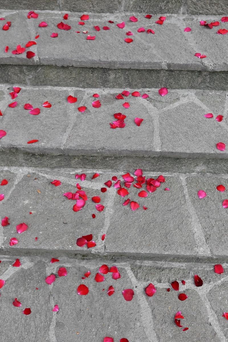 stairs, petals, pavement, rose, romance, romantic, love, concrete, texture, abstract
