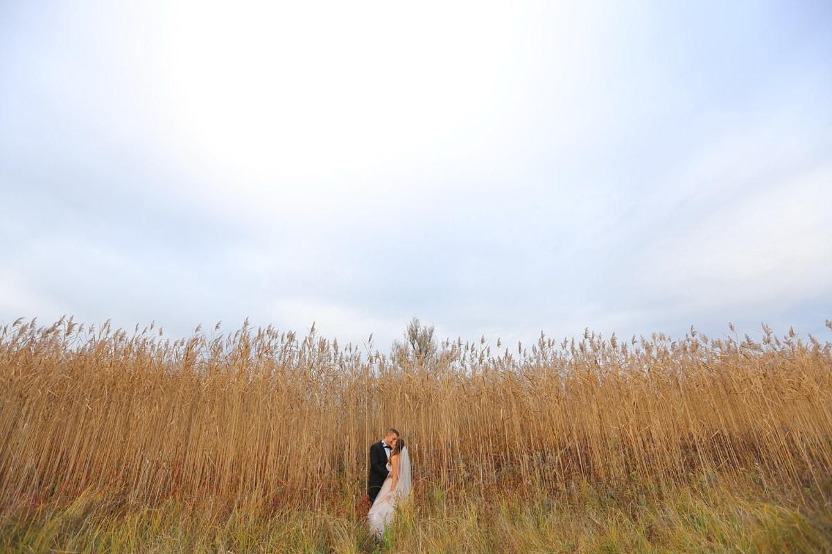 Gras, des ländlichen Raums, hoch, Braut, Bräutigam, Kuss, Wiese, Natur, Landschaft, Mädchen