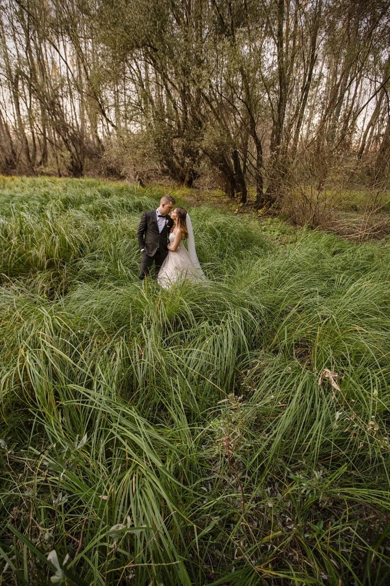 nature sauvage, la mariée, robe de mariée, jeune marié, costume, herbe, paysage, jeune fille, arbre, nature