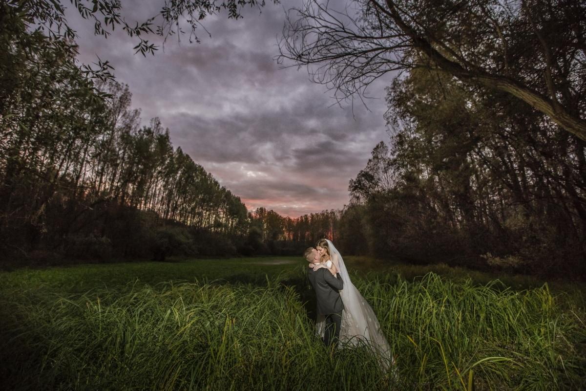 ερημιά, δάσος, σούρουπο, νύφη, γαμπρός, Φιλί, αγκαλιά, θεαματική, στοργή, δέντρο