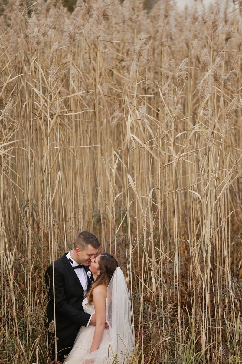 mariage, photographie, la mariée, jeune marié, nature sauvage, l'été, nature, domaine, paille, rural