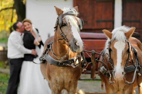 horses, carriage, romantic, hug, groom, kiss, bride, horse, cavalry, people
