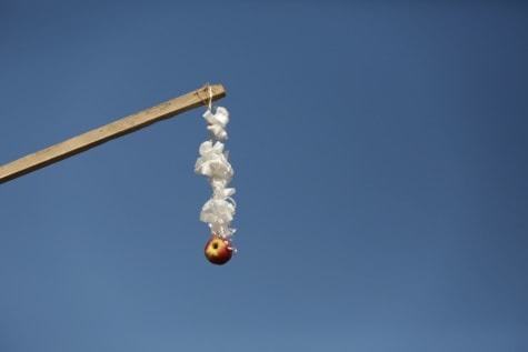 apple, stick, hanging, event, blue sky, manifestation, tradition, outdoors, high, air