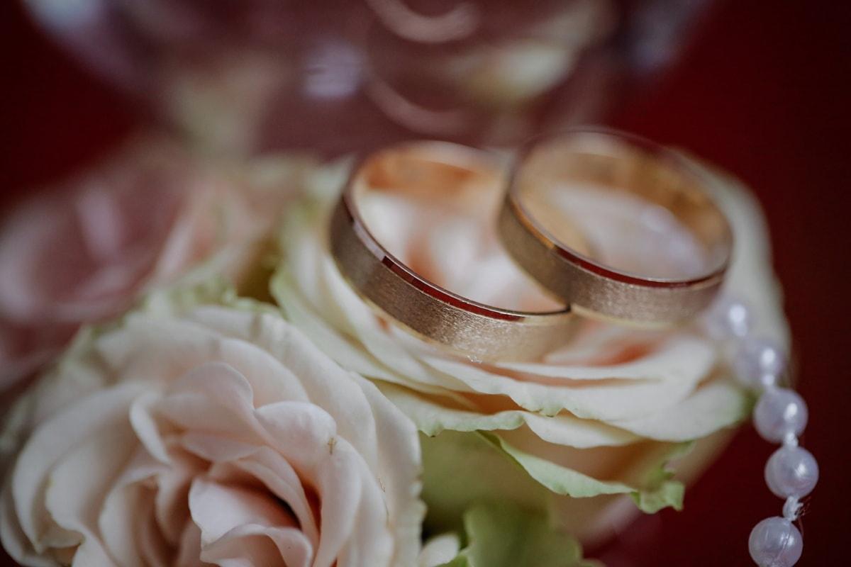 roses, wedding ring, gold, golden glow, shining, close-up, macro, romance, bride, marriage