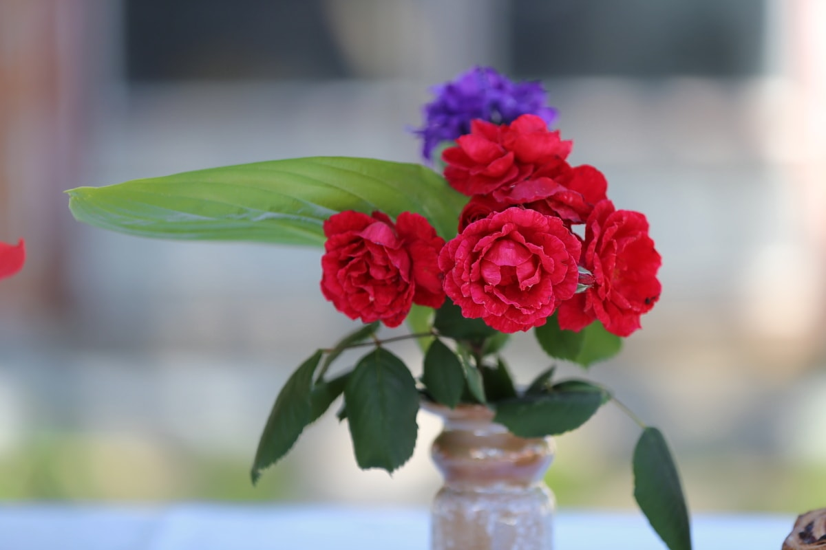 vase, petal, roses, flowers, flower, decoration, rose, bouquet, pink, romance