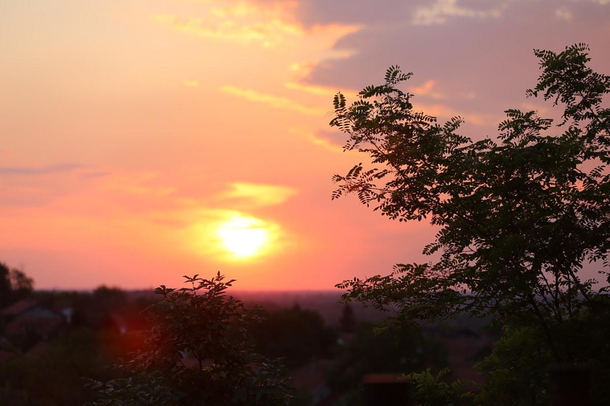 Panorama, brumeux, lever du soleil, jaune orangé, paysage, Star, aube, soleil, soirée, nature