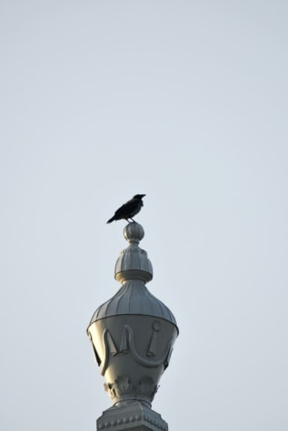 bird, crow, high, architecture, device, dome, art, outdoors, urban, animal