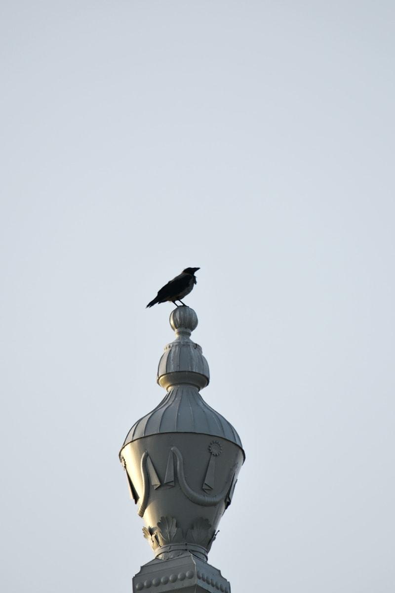 птица, ворона, высокая, архитектура, устройство, купол, искусство, на открытом воздухе, цикл, животное