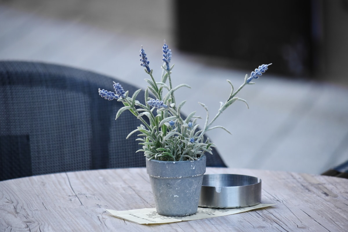 Cafeteria, Blumentopf, Aschenbecher, leere, Anlage, Blume, Blatt, Natur, Kraut, Flora
