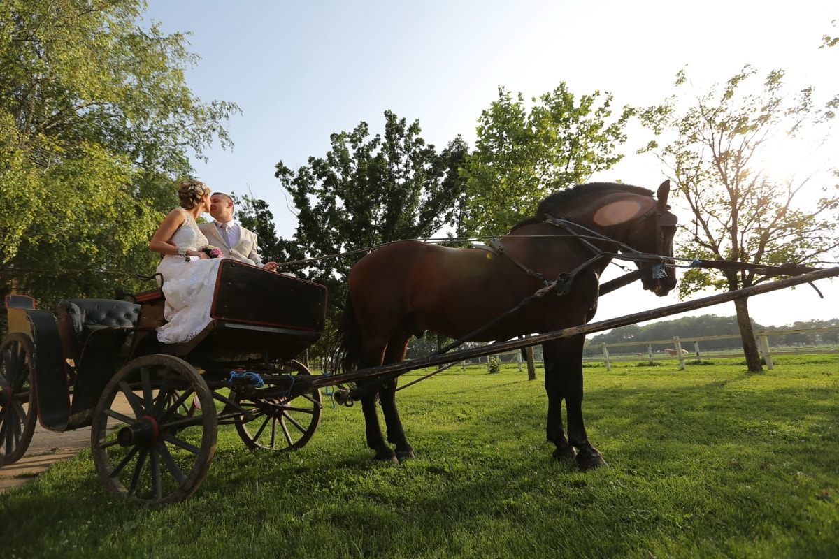 carriage, bride, groom, horse, village, farmland, cart, cavalry, horses, animal