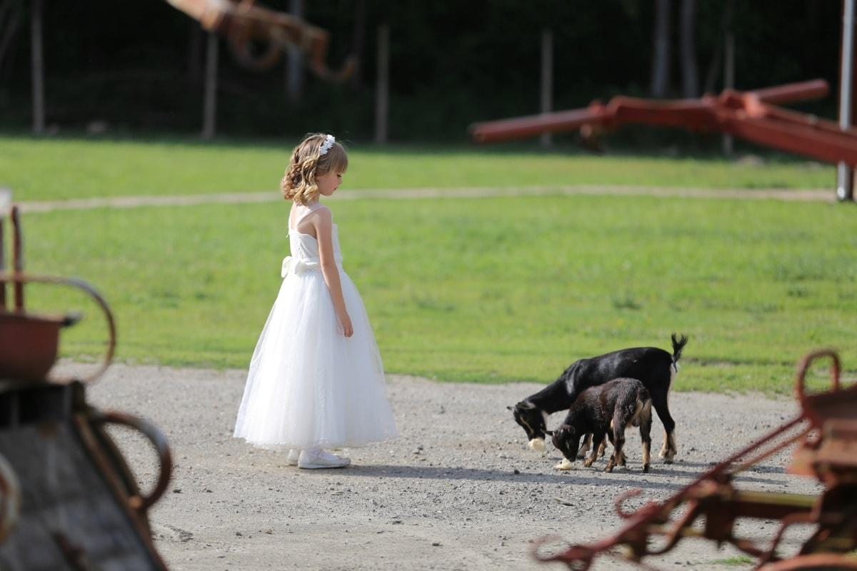 村, 農家, ヤギ, ドレス, かわいい女の子, ブロンドの髪, 子, 女の子, 楽しい, かわいい