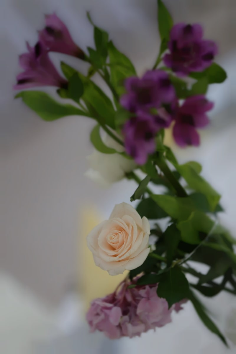 vase, white flower, blurry, focus, nature, leaf, bouquet, decoration, flower, rose
