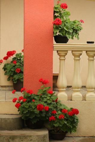цветочный горшок, забор, крыльцо, цветок, сад, Герань, архитектура, роза, лист, дом