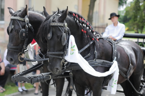 black, horses, village, villager, carriage, harness, device, horse, people, competition