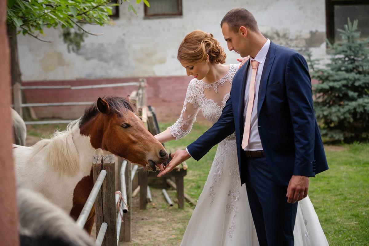 kuda poni, Pengantin, kuda, pengantin pria, rumah pertanian, pertanian, pertanian, petani, ternak, pedesaan