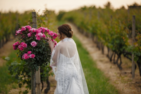 bride, roses, vineyard, fragrance, marriage, dress, married, wedding, bouquet, flowers