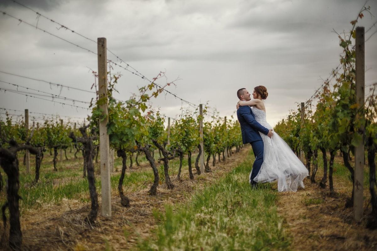 amour, couple, baiser, vignoble, étreindre, mariage, jeune fille, la mariée, jeune marié, gens
