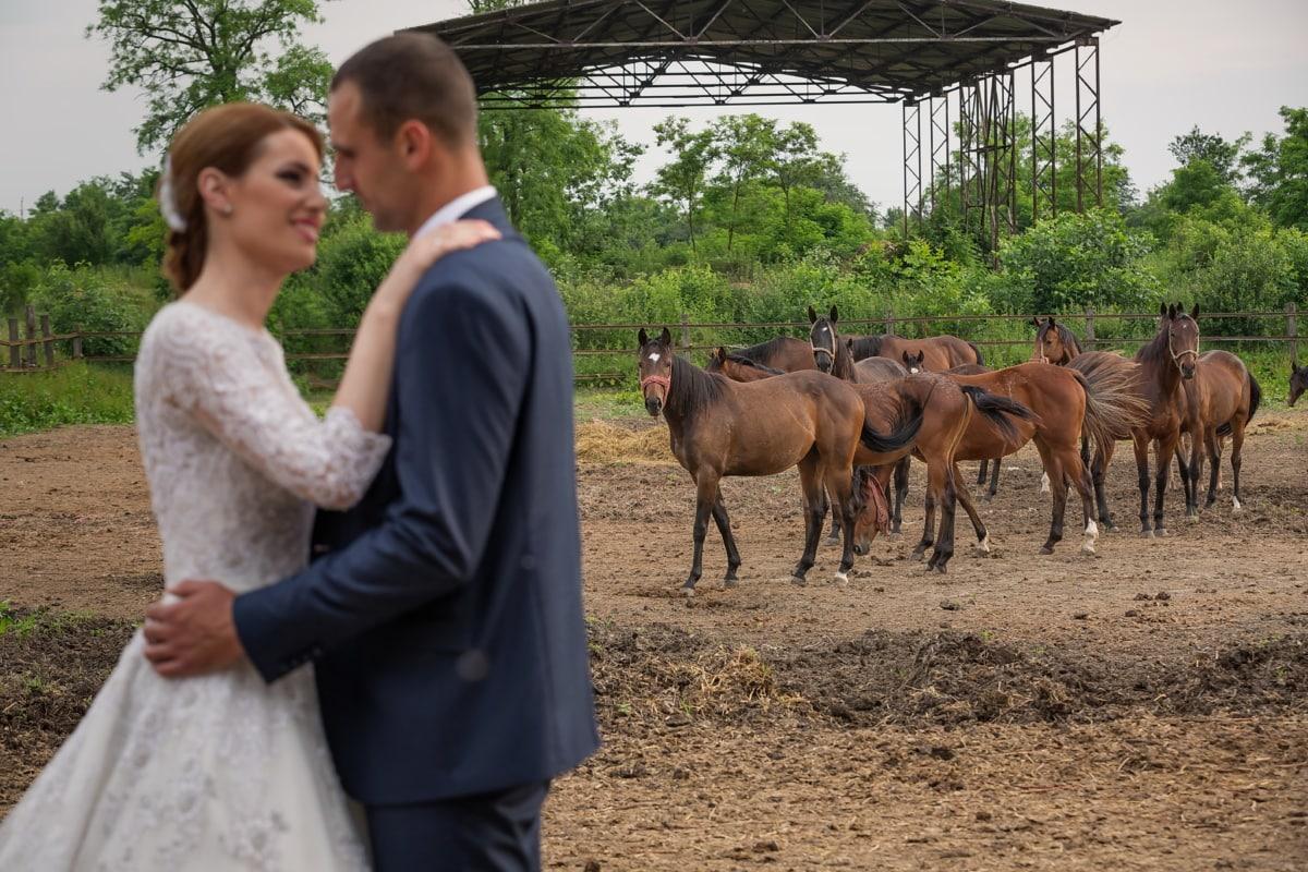 chevaux, Ranch, les terres agricoles, jeune marié, idyllique, la mariée, baiser, étreinte, romantique, cheval