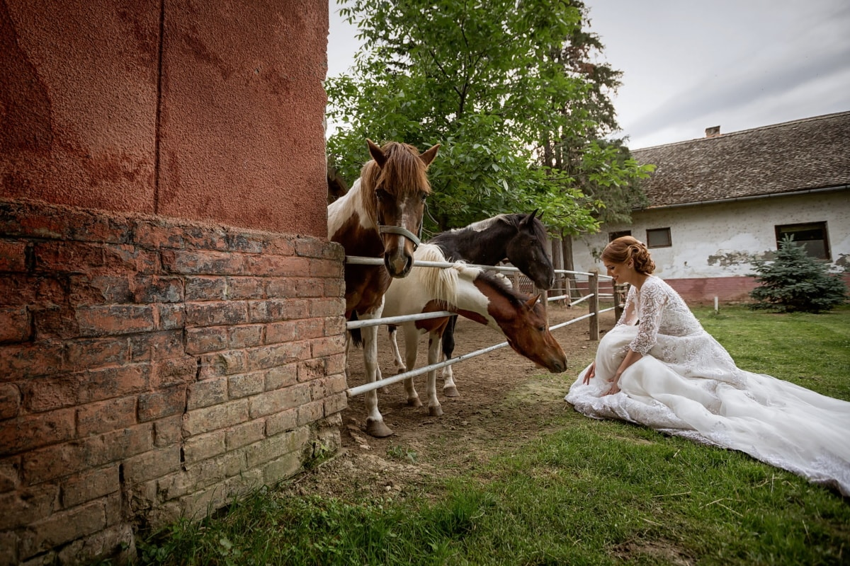 pony, horses, wedding dress, bride, wedding venue, horse, people, farm, woman, girl