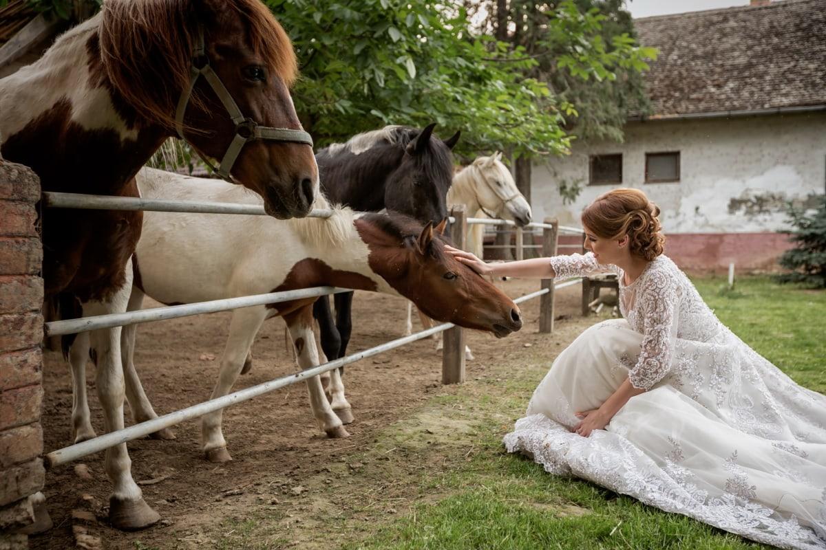 Pony, Pferde, Kleid, hübsches mädchen, Hochzeitskleid, Pferd, Hengst, Tier, Menschen, Hochzeit
