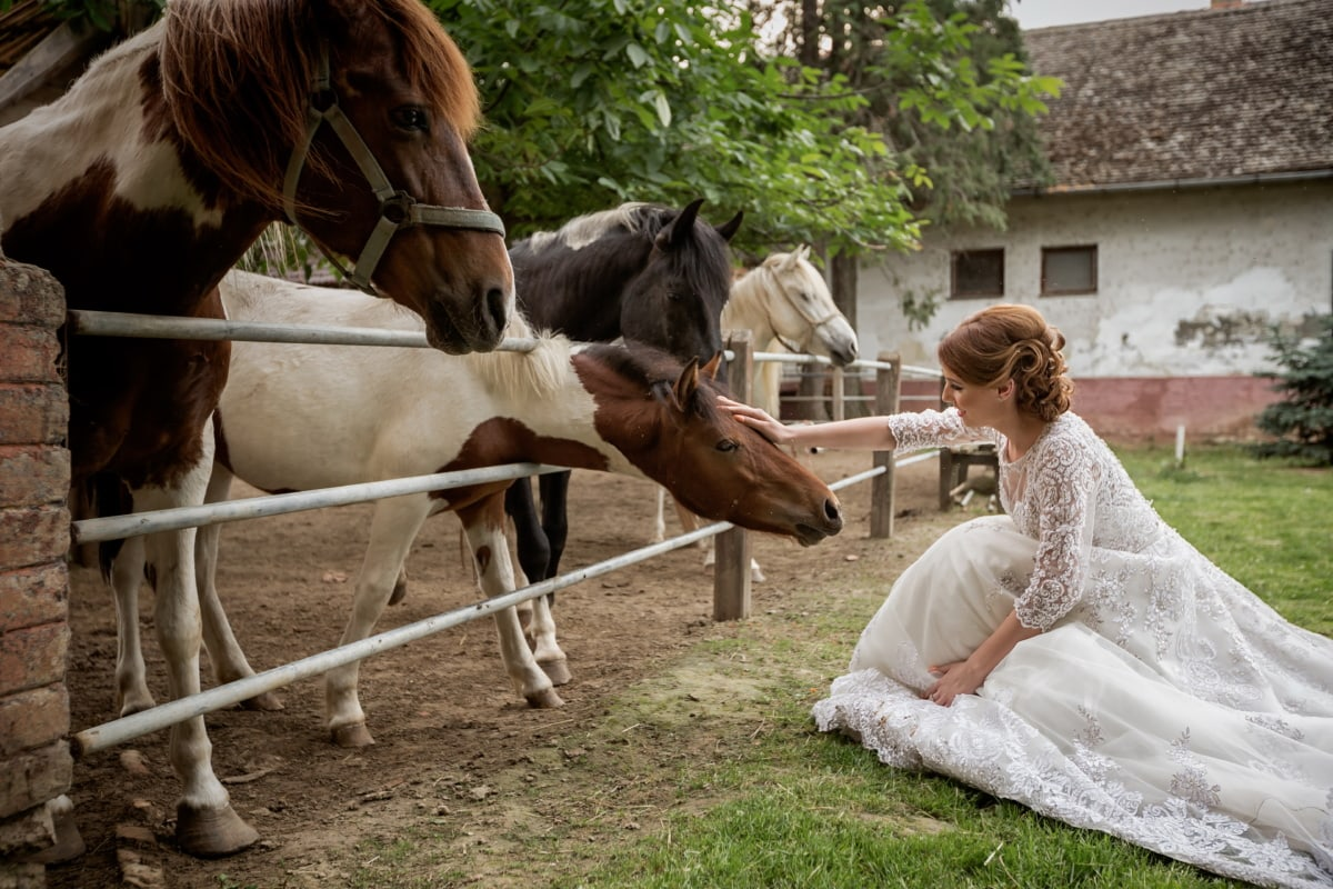 pony, horses, dress, pretty girl, wedding dress, horse, stallion, animal, people, wedding