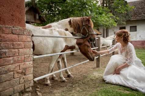 bride, ranch, blonde hair, horses, farmland, farm, horse, animal, rural, woman
