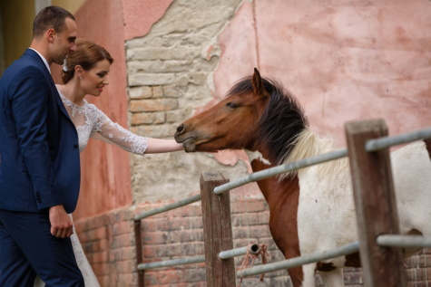 businessman, ranch, pretty girl, village, rural, horse, farmland, woman, animal, farm