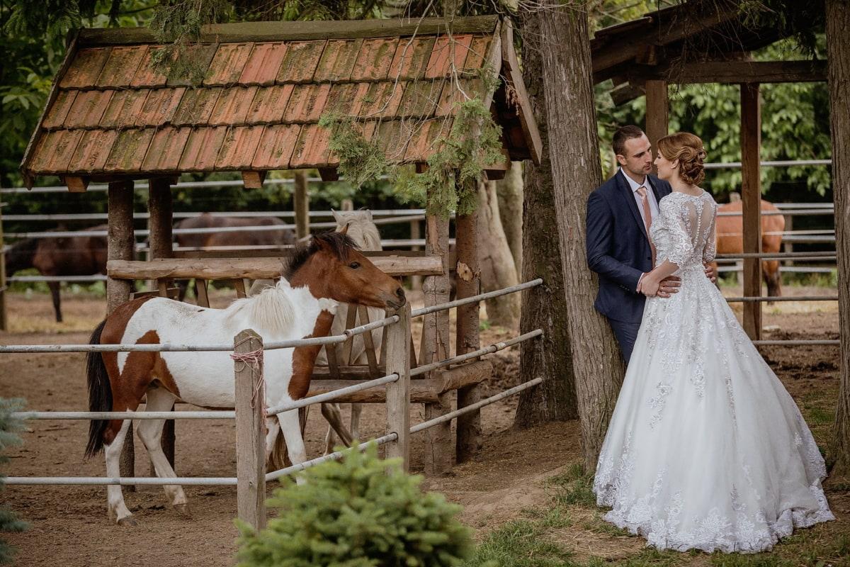 bride, villager, village, groom, wedding, livestock, photography, animals, horses, people