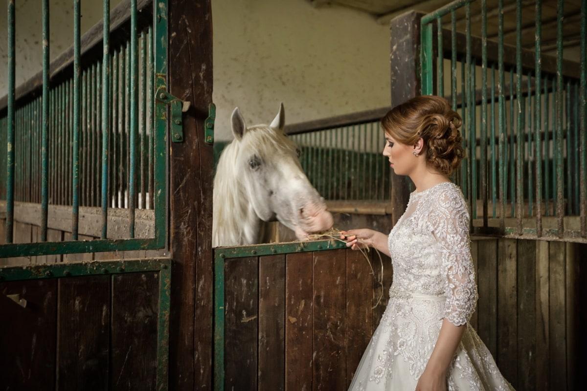 ферма, плевня, булката, хранене, кон, животните, коне, добитък, кавалерия, жена
