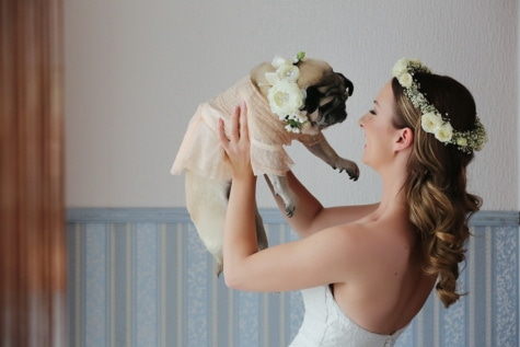 bride, holding, dog, costume, wedding dress, dress, wedding, woman, fashion, domestic