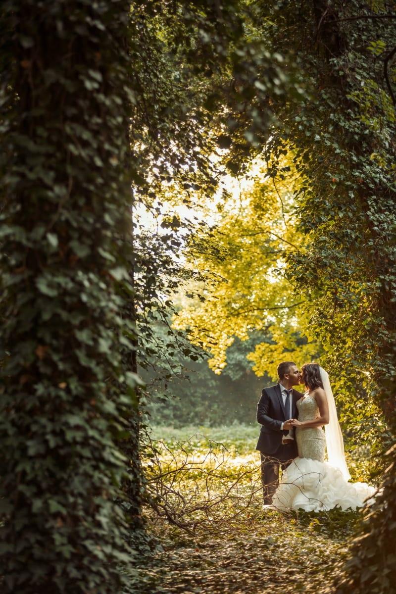아이비, 숲, 숨기기, 방금 결혼 했어, 남자, 키스, 여자, 관목, 공원, 가