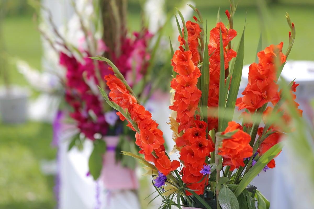 herbe, plante, flore, jardin, nature, fleur, été, feuille, épanouissement, brillant