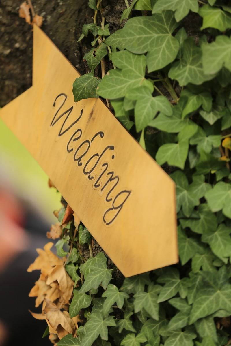 sign, wedding, ivy, wooden, leaf, nature, outdoors, summer, flora, bright
