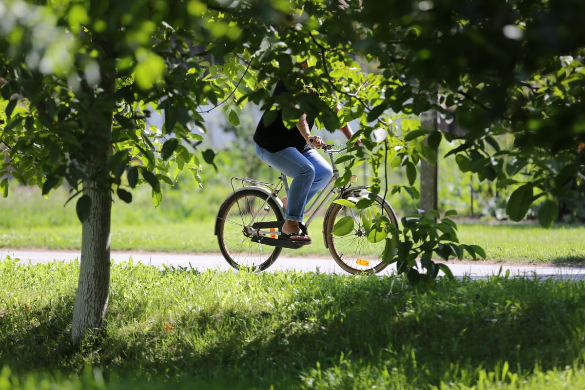 outdoor, bicycle, recreation, cycling, spring time, cyclist, orchard, wheel, conveyance, vehicle