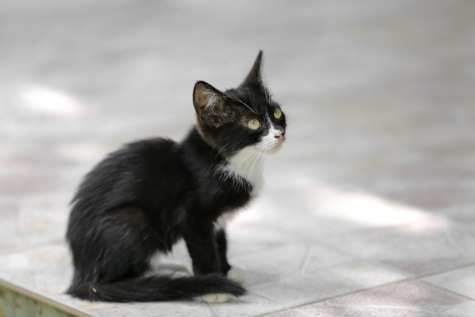 black, kitten, side view, cat, young, cute, feline, animal, fur, eye