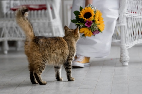 tabby cat, front porch, wedding bouquet, bride, furniture, pets, cat, kitty, domestic, kitten