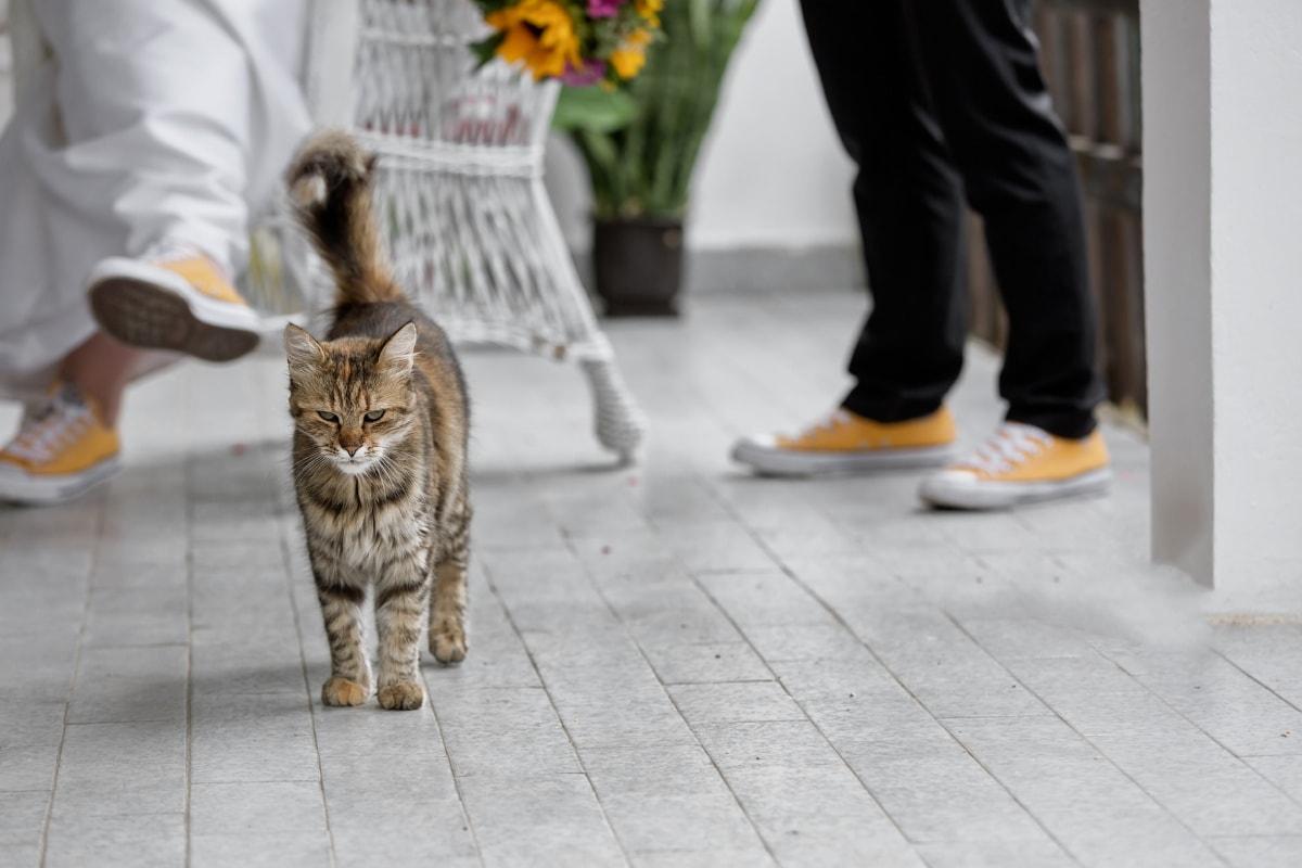 jasny brąz, Kot, ganku, zwierzętom, ludzie, kotek, siedzieć, miasto, portret, Bruk