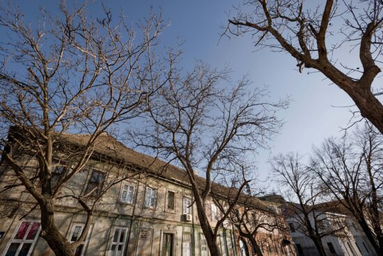 branches, buildings, tree, socialism, architectural style, urban area, trees, park, branch, wood
