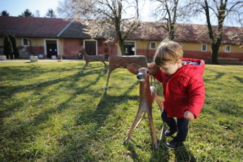 Детска площадка, младите, бебе, Момче, елен, игриво, дете, трева, дърво, двор
